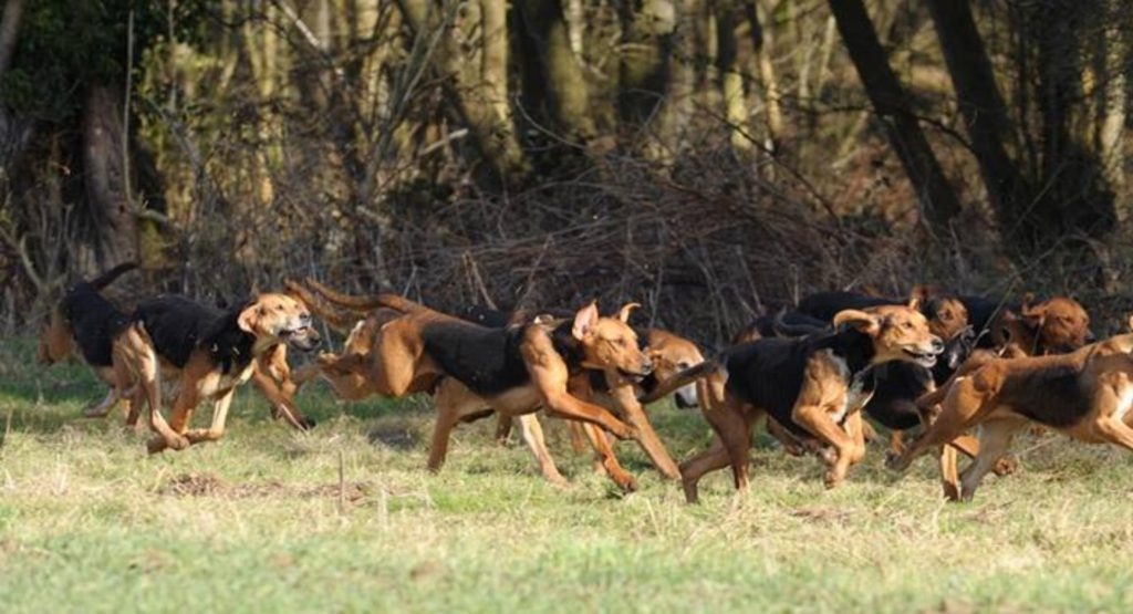 cropped-BB-hounds-running.jpg